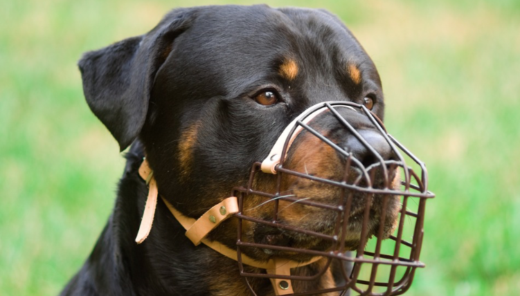 Dog Biting Laws In California
